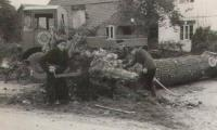 Timber-Tractor-1940s-1.jpg